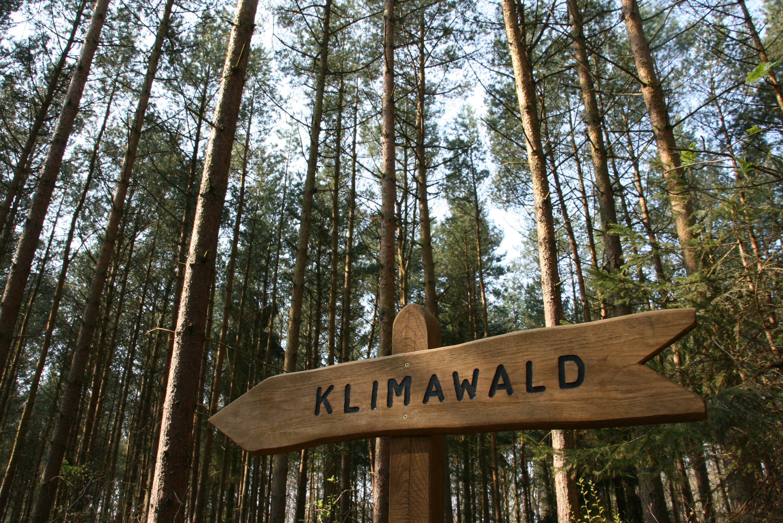 Klimawald Usedom-Koserow, Foto: Tourismusverband Mecklenburg-Vorpommern